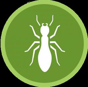 Ant Control San Diego, CA | San Diego, CA | San Diego Pest Management
