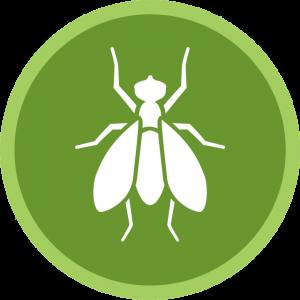 Pest Control San Diego, CA | San Diego Pest Management