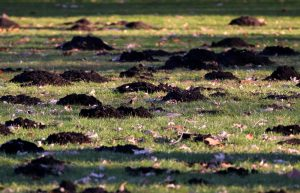 Gopher Control San Diego, CA | San Diego Pest Management