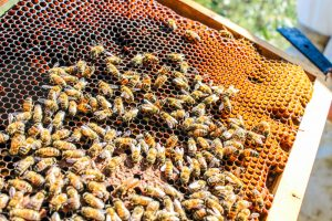 Beehive Removal San Diego, CA | San Diego Pest Management