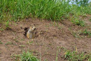San Diego Pest Management | Squirrel Control San Diego