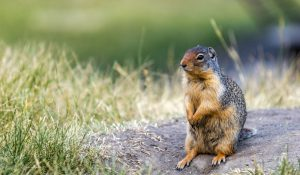 San Diego Pest Management | Squirrel Control San Diego