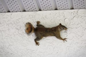 Squirrel Trapping San Diego, CA | San Diego Pest Management