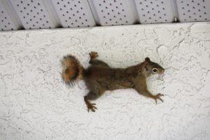 Squirrel Trapping San Diego, CA | San Diego Pest Management