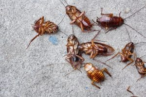 Cockroach Control San Diego, CA | San Diego Pest Management