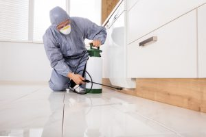 Pest Control Treatment San Diego, CA | Ant and Spider Control San Diego, CA | San Diego Pest Management