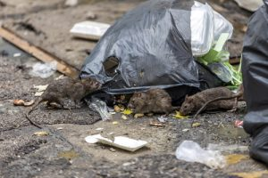 Rodent Control San Diego, CA | San Diego Pest Management