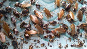 Roach Control San Diego, CA | Waterbug Treatment San Diego, CA | San Diego Pest Management