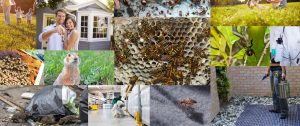San Diego Pest Management | Ant Control | Spider Control | Bee Removal | Termite Control
