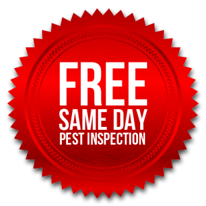 Pest Control San Diego, CA | San Diego Pest Management | Termite Control Treatments and Fumigation San Diego, CA