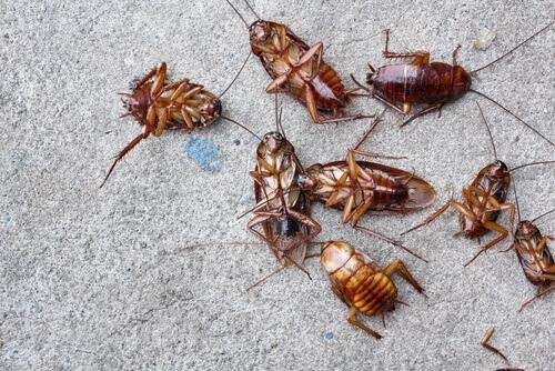 Cockroach Control San Diego, CA